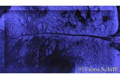fiona-schiffl-wet-leaf-purple-2015