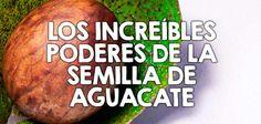Los increíbles poderes de la semilla de aguacate