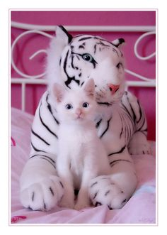 When I grow up, I want to also have black stripes | Community Post: The Cutest Animals You Have Ever Seen ...