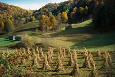 Corn shocks in Autumn. Photo by Ed Reed.
