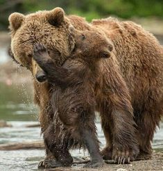 Aaaw Mother and Cub!