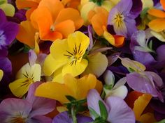 Edible Flowers: pansies/violas!!! I just adore pansies!!! <3