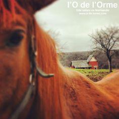 Gite Normandie - Cottage Normandy www.o-de-lorme.com