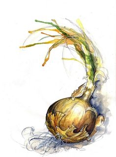 onion watercolour, Amy Holiday (http://www.amyholliday.co.uk/)
