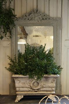 green plant in front of a mirror ...  nice decoration idea