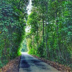 Our peak hour traffic. What is yours like? http://samsaraubud.com/ #samsaraubud #love #nature #islandlife #balinese #tropicalisland #travel #paradise #sanctuary #wanderlust #bali #areyoureadytowander