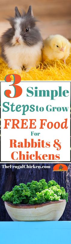 Got rabbits or chickens? Why not save on your feed bill? Here's how (and what) to grow so you have free food to feed them! (back yard farm) Raising Rabbits, Raising Backyard Chickens, Backyard Poultry, Backyard Farming, Pet Chickens, Permaculture, Chicken Humor, Chicken Coops, Chicken Houses