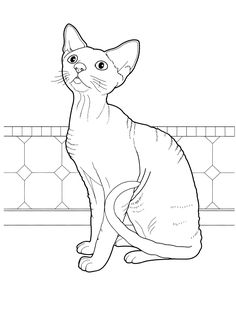 cat_29 Cats coloring pages for teens and adults