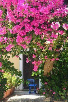 Meis Greece, Island, Beach, Plants, Seaside, Islands, Flora, Planters, Grease