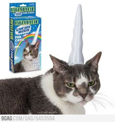 in case you feel like your cat is unhappy stick a inflatable unicorn horn on their heads... it obviously made this one happier!