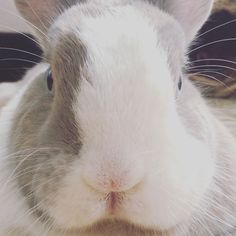 Let's play a game BUNS! First who blinks his eyes... LOOSE! Follow Tiffo on Instagram @tiffoco