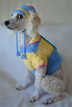"""Posing Poodle... and he says, """"Give me a  break."""""""