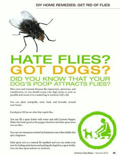 How To Get Rid Of Flies Naturally Nz