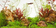 Layout 67 - Tropica - Tropica Aquarium Plants