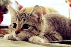 fondos de pantalla de gatitos tiernos