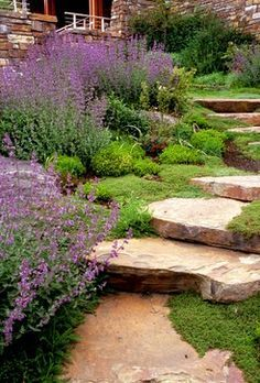 Sten on Pinterest | Backyard Landscape Design, Lavender Plants and ...