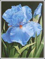 artist judy sleight | Blue Iris on Black Fantastic Voyage Iris