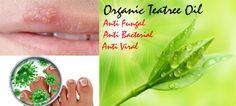 Anti fungal Anti bacterial  Anti viral