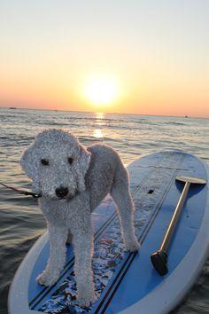 Chloe likes the paddleboard!