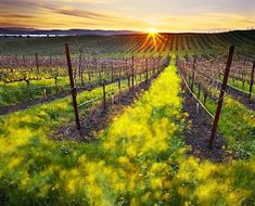 A beautiful vineyard somewhere in the world