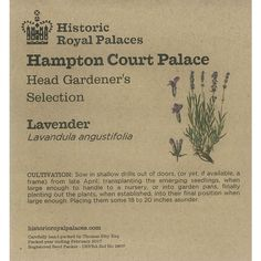 Create your own kitchen garden with our range of heritage vegetable seeds, including this Lavender heritage seeds. Lavender Seeds, Lavender Garden, Hampton Court Flower Show, Lavandula Angustifolia, Garden Seeds, Garden Gifts, Garden Inspiration, The Hamptons, Garden Design