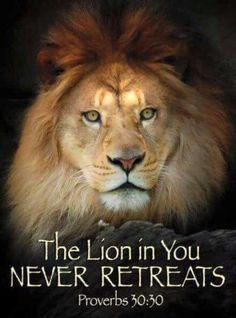 Jesus is the Lion of the Tribe of Judah Lion Quotes, Bible Quotes, Quotes Quotes, Qoutes, Jesus Quotes, Tattoo Quotes, Proverbs 30, Tribe Of Judah, Lion Of Judah