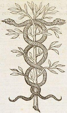 Rerum Sapientia custos - Wisdom is the guardian of all things - Claude Paradin, Devises heroïques, 1557