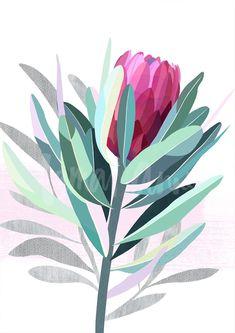 Discover Australian artist Lamai Anne's beautiful Native Grace range. Modern and contemporary art for you home interior. Bring the Australian outdoors inside! Protea Art, Protea Flower, Art Floral, Australian Native Flowers, Australian Artists, Fleur Protea, Pressed Flower Art, Ouvrages D'art, Arte Pop