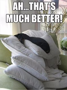 """The dachshund made a pillow fort. Lilli loved digging in pillows to make """"nests"""". She was weird. Funny Animal Memes, Funny Animal Pictures, Funny Animals, Cute Animals, Animal Pics, Funny Memes, Pet Memes, Animal Quotes, Funny Captions"""