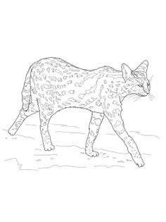 The 451 best Animal Colouring Pages images on Pinterest ...