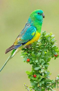Exotic pets 609604499535180606 - Source :flying of birds Source by Tropical Birds, Exotic Birds, Colorful Birds, Exotic Pets, Beautiful Creatures, Animals Beautiful, Cute Animals, Cute Birds, Pretty Birds