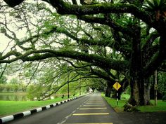 Famous public park in Taiping Perak Malaysia Taiping, Kinds Of Fruits, Beautiful Park, Flowering Trees, Spring Green, Fruit Trees, Beautiful Landscapes, Architecture Design, Places To Go