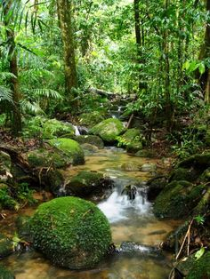 Amazon forest.....The air we breathe.....Respect !