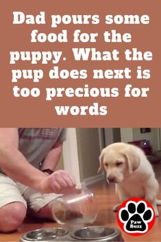 I just died a little on the inside. oh my goodness! Cute Baby Videos, Cute Animal Videos, Funny Animal Pictures, Cute Funny Animals, Funny Dogs, Dog Praying, Dog Love, Puppy Love, Boxer Dog Quotes