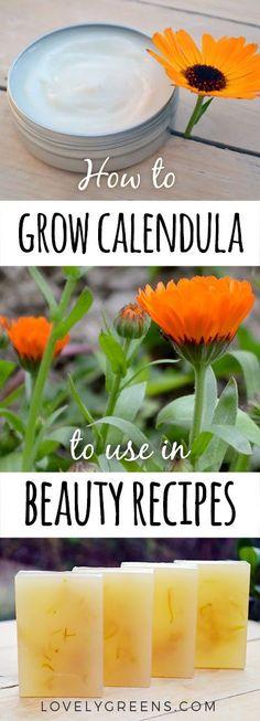 Las 182 Mejores Imágenes De Jardín Jardines Jardinería Y