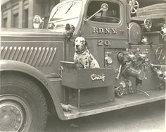 special box made just for the dalmation to ride on engine in FDNY