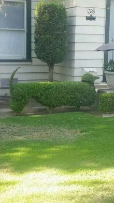 Great hedge!