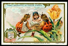 Liebig S576 - Children in Insect Costumes #3, via Flickr.