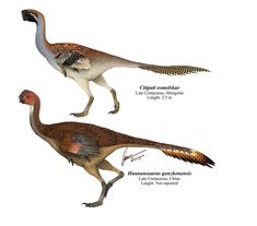"""Huanansaurus and Citipati by Gabriel N. Uguet - """"The newly described Huanansaurus ganzhonensis and its close relative Citipati osmolskae. Two of the myriad of oviraptosaurs from Asia."""""""