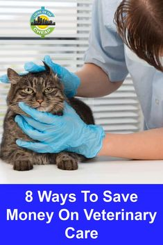 I asked myself what the average person, someone who does have budget concerns, would do if a beloved pet (my grand-dog, for instance) needed expensive medical care. I learned that certain organizations offer help to pet owners who can't afford necessary but costly treatments.Here are eight ways to find cheaper health care for your pets. Ways To Save Money, Money Saving Tips, Cheap Pets, Diy Dog Treats, Veterinary Care, Average Person, Pet Travel, Medical Care, Frugal Living