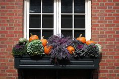 fall window box with ornamental cabbage and pumpkins