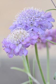 ♔ gdelicate flowers