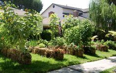 Gärtnern auf Strohballen für Gemüse- und Blumenbeete