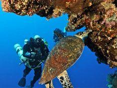 Viajes el mar Rojo #Hurgada #Sharm #Egipto http://www.maestroegypttours.com/sp/paquetes-de-viajes-Egipto/Paquetes-Mar-Rojo-Egipto