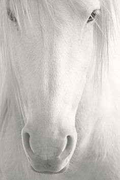 Beauty, thy name is horse.  ;)