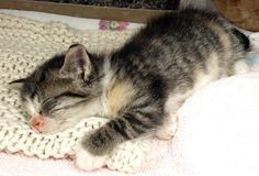Suki - even an action cat needs a nap now and then