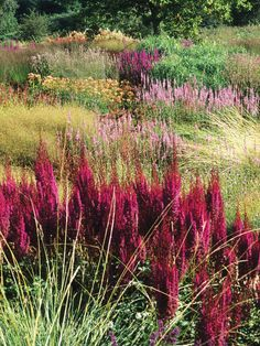 Prairie-style planting is a dramatic way to create naturalistic swathes of color over a large area.