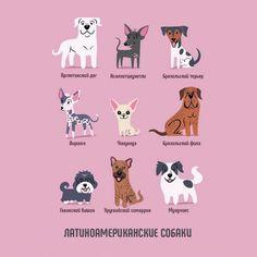 Латиноамериканские собаки
