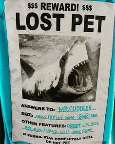 """""""Excuse me, have you seen my pet shark anywhere? She answers to the name Jaws. Funny Animal Memes, Funny Animal Pictures, Funny Animals, Funny Memes, Hilarious, Jokes, Cthulhu, Shark Bait, Pet Shark"""