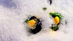 May the Ice Melt! by elena44